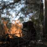 Bushcraft vs. survival